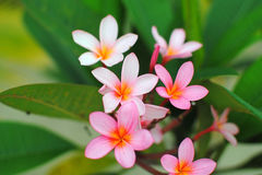 Ciérrese encima de la flor de Og Fotografía de archivo libre de regalías
