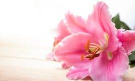 Ciérrese encima de la flor del lirio en el fondo blanco Imágenes de archivo libres de regalías