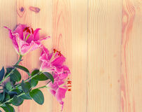 Ciérrese encima de la flor del lirio en el fondo de madera Fotos de archivo