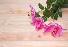Ciérrese encima de la flor del lirio en la madera Fotografía de archivo libre de regalías