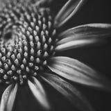 Ciérrese encima de la flor en blanco y negro Imagen de archivo libre de regalías
