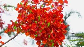 Ciérrese encima de la flor hermosa en naturaleza como fondo 4K, videoclip de UHD almacen de video