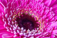 Ciérrese encima de la flor rosada imagenes de archivo