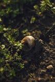 Ciérrese encima de la foto de la cáscara en hierba, plantas, flores blancas y ramas fotos de archivo