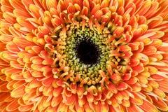 Ciérrese encima de la foto de una flor amarilla hermosa Foto de archivo libre de regalías