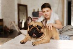 Ciérrese encima de la foto del perro del barro amasado que mira adelante Foto de archivo libre de regalías
