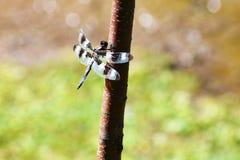 Ciérrese encima de la foto de la libélula insecto imagen de archivo
