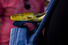 Ciérrese encima de la foto de una serpiente imagen de archivo libre de regalías