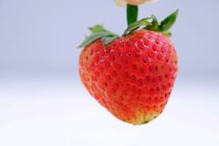Ciérrese encima de la fresa roja Imagen de archivo libre de regalías