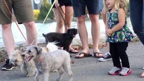 Ciérrese encima de la gente que camina para el perro metrajes