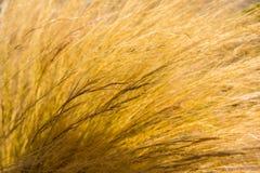Ciérrese encima de la hierba de la paja que sopla en viento Imagen de archivo libre de regalías