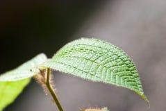 Ciérrese encima de la hoja de la planta Fotos de archivo libres de regalías