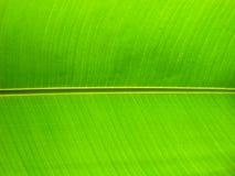 Ciérrese encima de la hoja del plátano Fotos de archivo