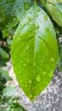 Ciérrese encima de la hoja después de lluvia con descenso Imagenes de archivo