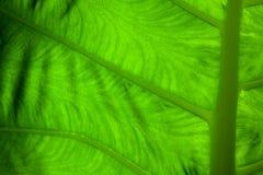 Ciérrese encima de la hoja verde Imagenes de archivo