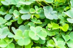 Ciérrese encima de la hoja verde fresca. Foto de archivo