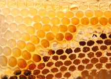 Ciérrese encima de la imagen de la colmena de la abeja Imágenes de archivo libres de regalías
