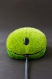 Ciérrese encima de la imagen del ratón del eco Imagen de archivo libre de regalías