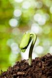 Ciérrese encima de la nueva vida-planta que crece de la semilla Fotografía de archivo