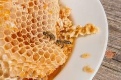 Ciérrese encima de la opinión la abeja de trabajo en el panal con el hon dulce Fotografía de archivo