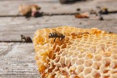 Ciérrese encima de la opinión la abeja de trabajo en el panal con el hon dulce Imágenes de archivo libres de regalías