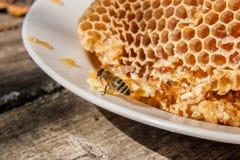 Ciérrese encima de la opinión la abeja de trabajo en el panal con el hon dulce Foto de archivo