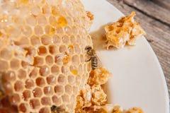 Ciérrese encima de la opinión la abeja de trabajo en el panal con el hon dulce Foto de archivo libre de regalías