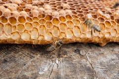 Ciérrese encima de la opinión la abeja de trabajo en el panal con el hon dulce Fotos de archivo