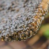 Ciérrese encima de la opinión abejas Foto de archivo libre de regalías