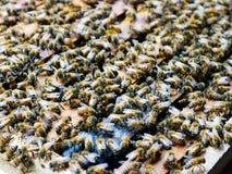 Ciérrese encima de la opinión abejas de trabajo Fotografía de archivo libre de regalías