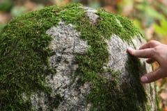 Ciérrese encima de la opinión el musgo en una piedra grande Fotografía de archivo