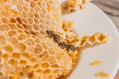 Ciérrese encima de la opinión la abeja de trabajo en el panal con el hon dulce Imagen de archivo