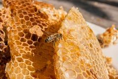Ciérrese encima de la opinión la abeja de trabajo en el panal con el hon dulce Imagen de archivo libre de regalías