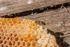 Ciérrese encima de la opinión la abeja de trabajo en el panal con el hon dulce Fotografía de archivo libre de regalías