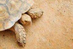 Ciérrese encima de la opinión la tortuga Foto de archivo