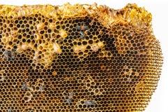 Ciérrese encima de la opinión las abejas de trabajo en el panal Imágenes de archivo libres de regalías