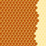 Ciérrese encima de la opinión las abejas de trabajo en las células de la miel Imagen de archivo libre de regalías
