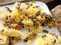 Ciérrese encima de la opinión las abejas de trabajo en las células de la miel Imágenes de archivo libres de regalías