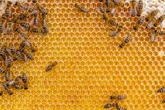Ciérrese encima de la opinión las abejas de trabajo en las células de la miel Fotos de archivo libres de regalías