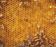 Ciérrese encima de la opinión las abejas de trabajo en las células de la miel Fotos de archivo