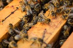Ciérrese encima de la opinión las abejas de trabajo - foco suave Fotografía de archivo libre de regalías