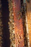 Ciérrese encima de la opinión las abejas que pululan en un panal Fotografía de archivo
