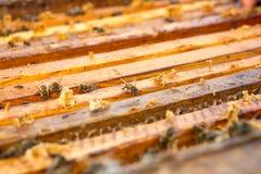 Ciérrese encima de la opinión las abejas que pululan en un panal Imagen de archivo