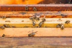 Ciérrese encima de la opinión las abejas que pululan en un panal Foto de archivo libre de regalías