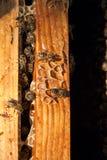 Ciérrese encima de la opinión las abejas que pululan en un panal Imagenes de archivo