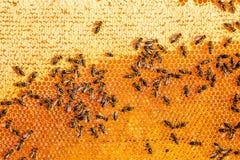 Ciérrese encima de la opinión las abejas de trabajo en el panal en colmenar con la miel dulce La miel es producción sana de la ap Foto de archivo