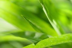 Ciérrese encima de la opinión de la naturaleza de la hoja verde foto de archivo libre de regalías