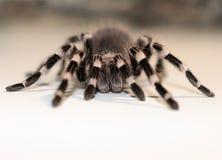 Ciérrese encima de la opinión sobre la araña grande imágenes de archivo libres de regalías
