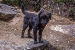 Ciérrese encima de la opinión un pequeño perro negro que se coloca en una roca Sagarma imagen de archivo libre de regalías