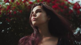 Ciérrese encima de la opinión una mujer joven morena hermosa que hace una pausa el arbusto floreciente de rosas rojas y que mira  almacen de metraje de vídeo